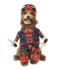 Marvel Pet Costume Center If you need to try the latest style of captain marvel costumes, be sure to check out this page. marvel pet costume center