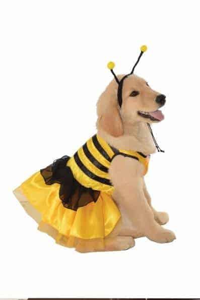 Baby Bumblebee Dog Costume  sc 1 st  Pet Costume Center & Baby Bumblebee Dog Costume - PetCostumeCenter.com