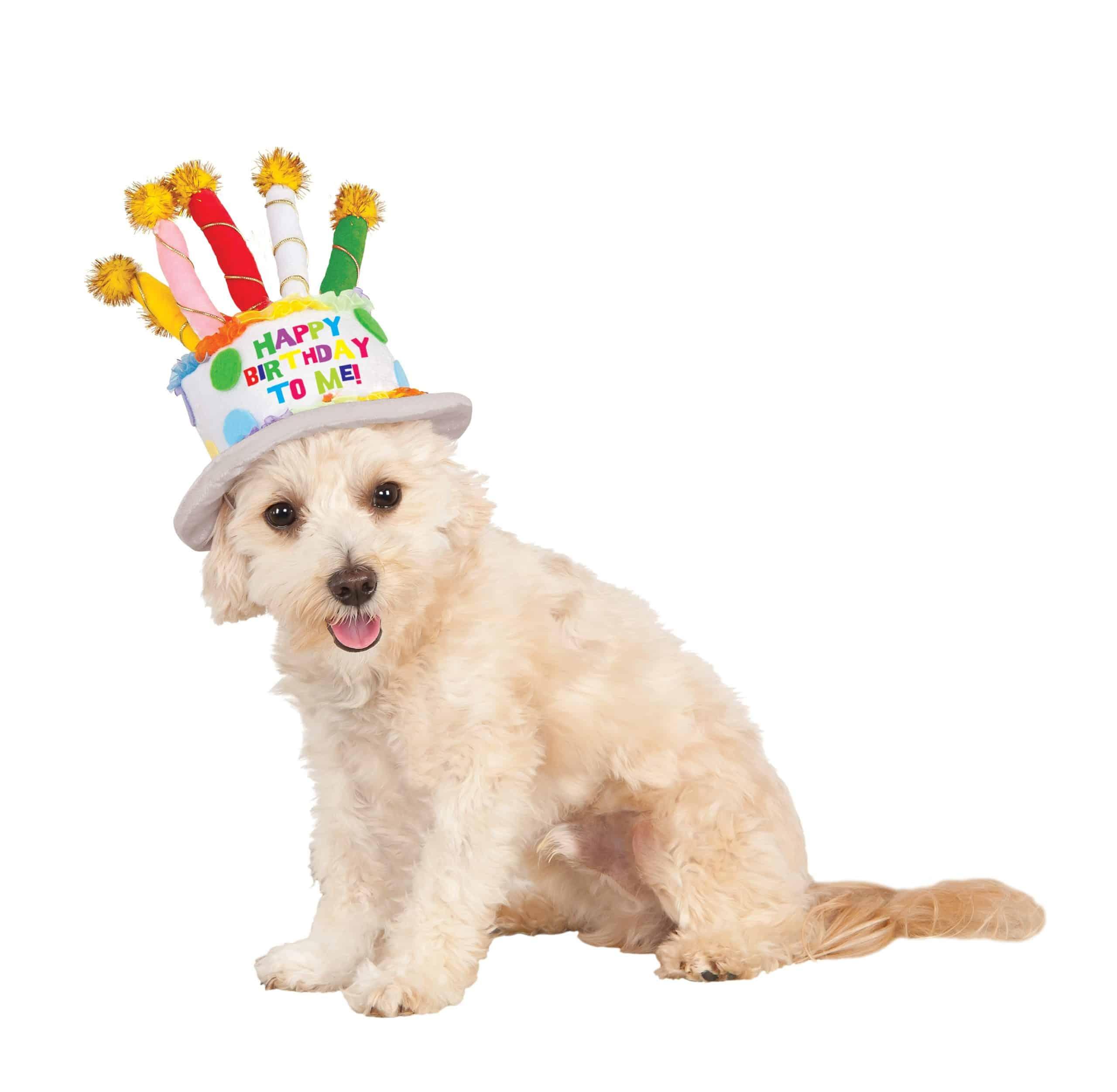Birthday Cake Dog Hat