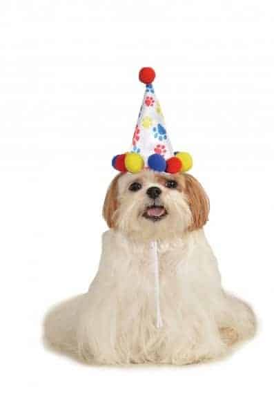 Birthday Boy Hat Dog Costume