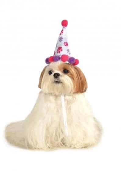Birthday Girl Hat Dog