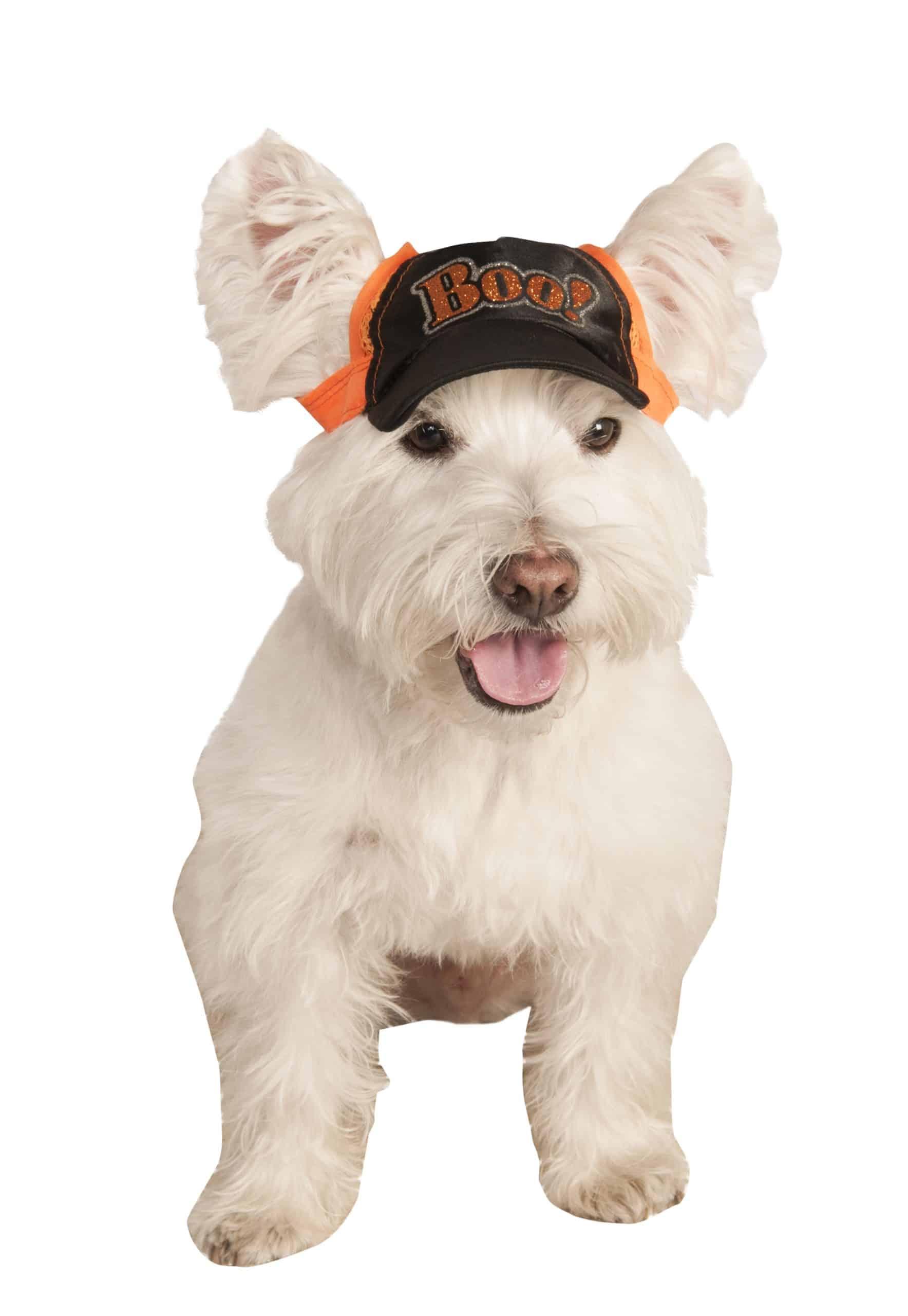 Boo Halloween Dog Baseball Cap