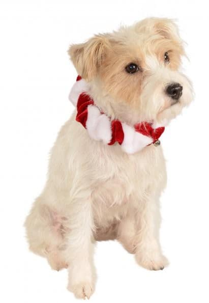 Candy Cane Bell Dog Collar