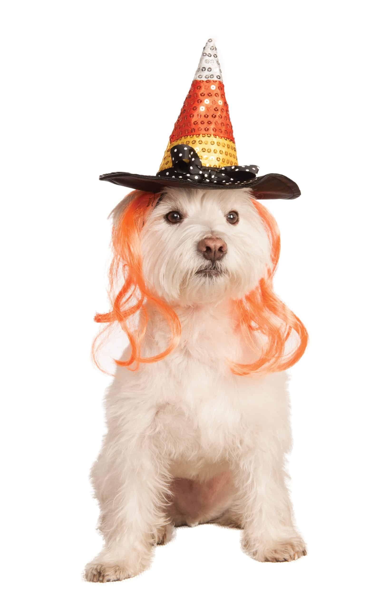 Candy Corn Dog Hat