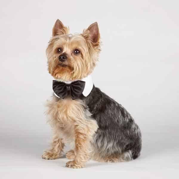 Canine Royal Black Bowtie