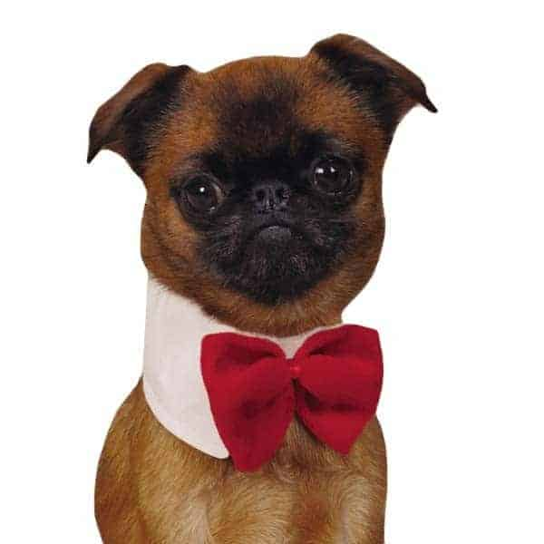 Canine Royal Red Dog Bowtie