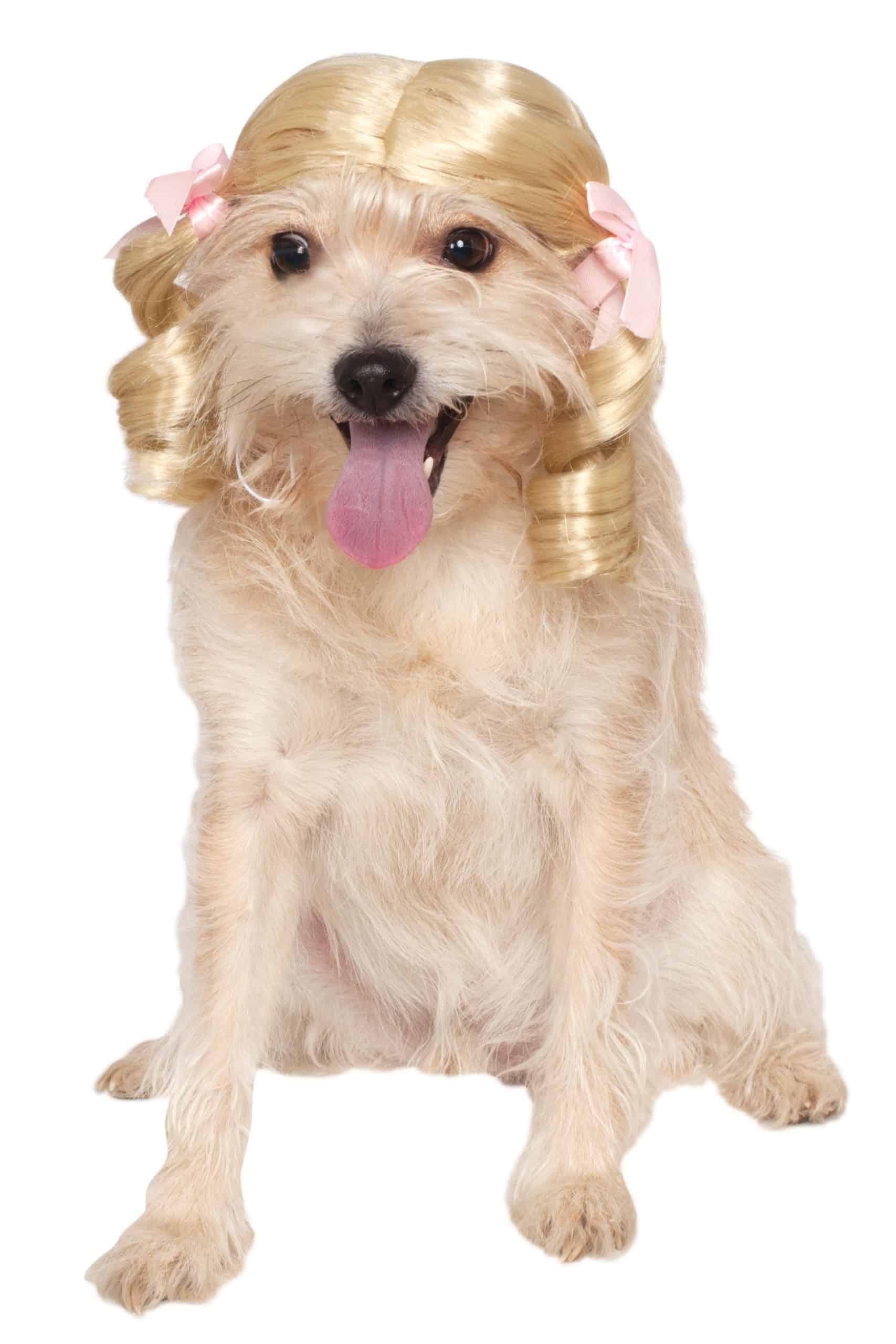 Cheerleader Dog Wig