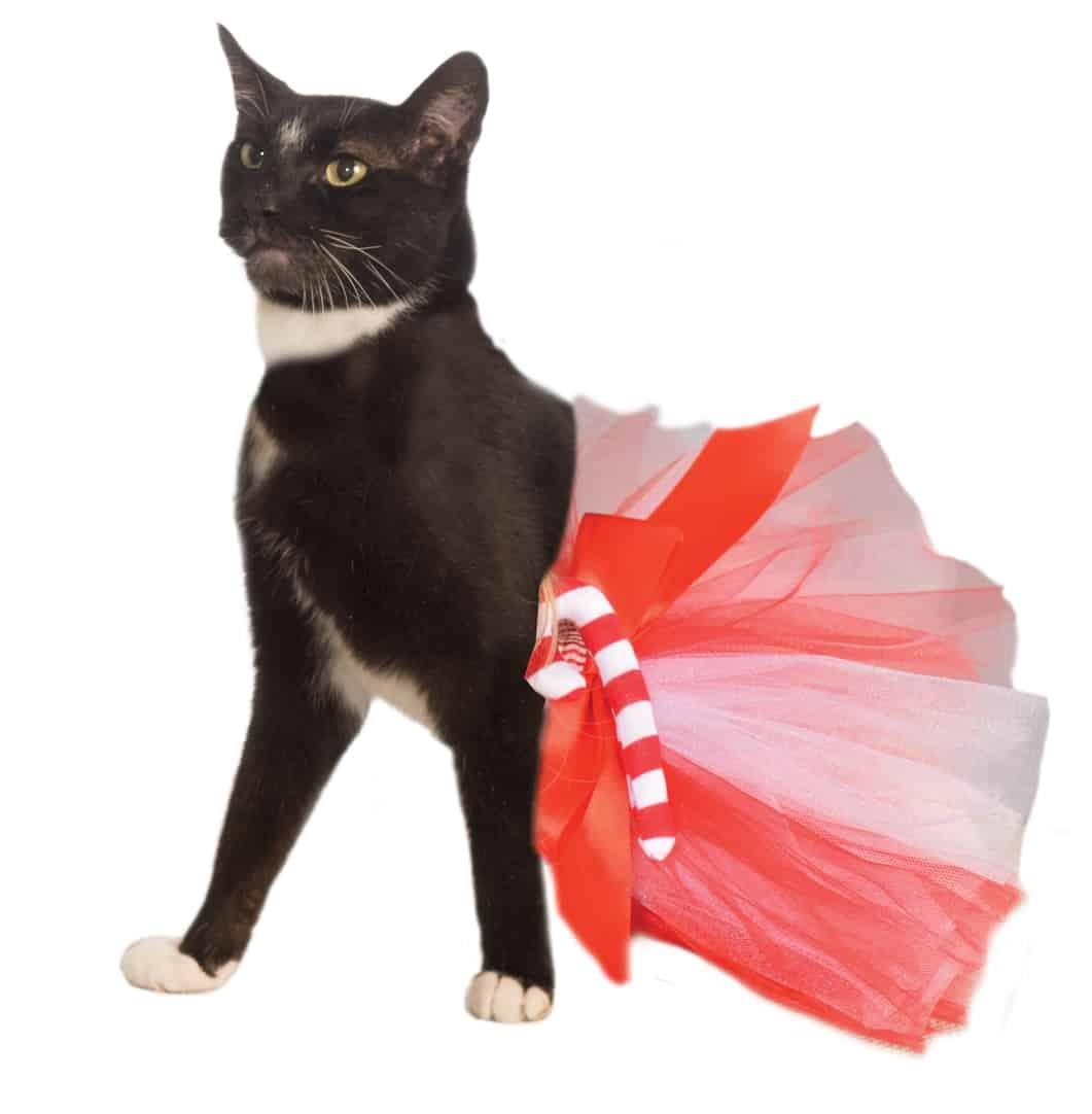 Candy Cane Dog Cat Tutu Costume