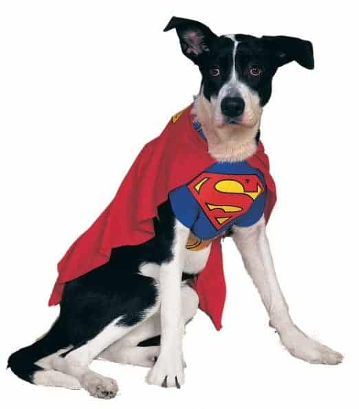 Classic Superman Dog Costume