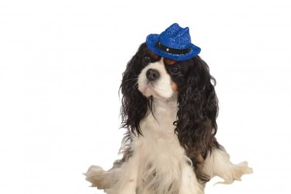 Cowboy Hat Blue Sparkle Dog Costume