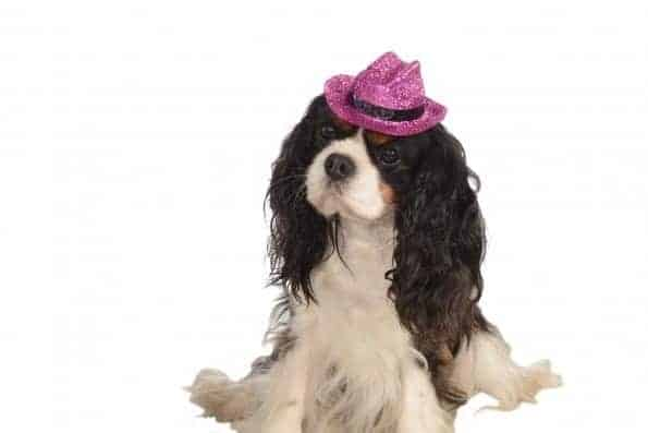 Cowboy Hat Pink Sparkle Dog Costume