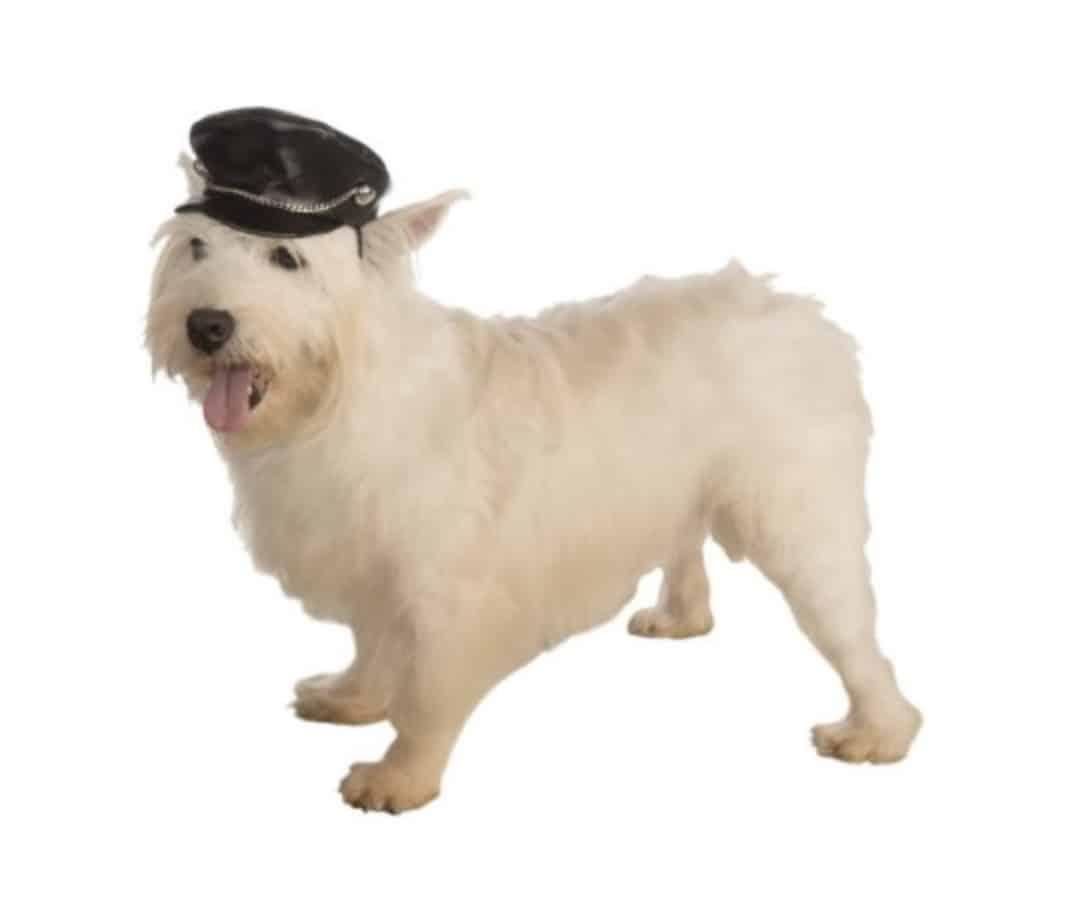 Dog Biker Hat
