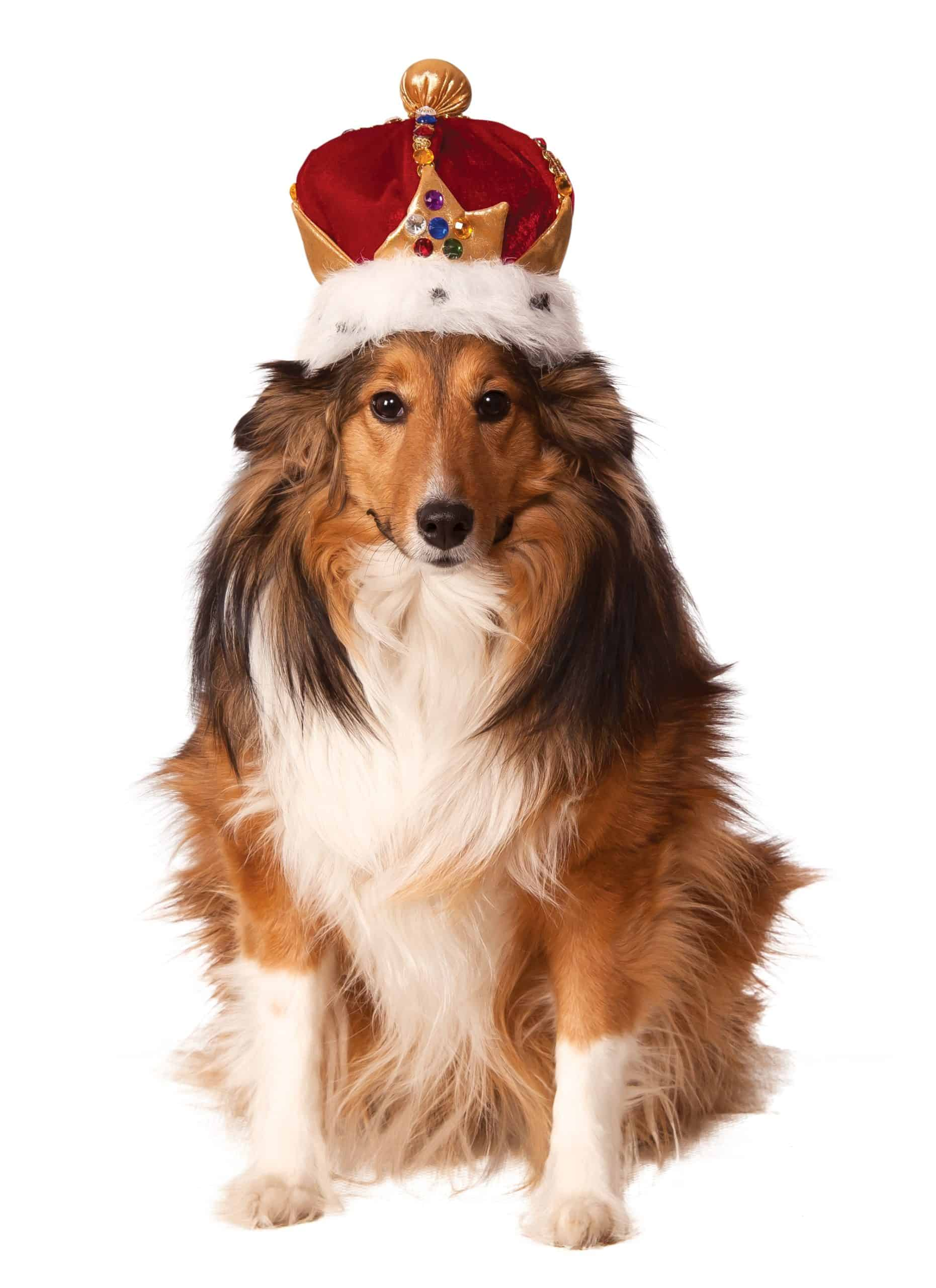 Dog Kings Crown