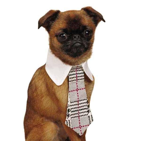 Dog Plaid Necktie
