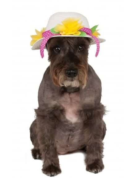 Easter Bonnet Kentucky Derby Dog Hat