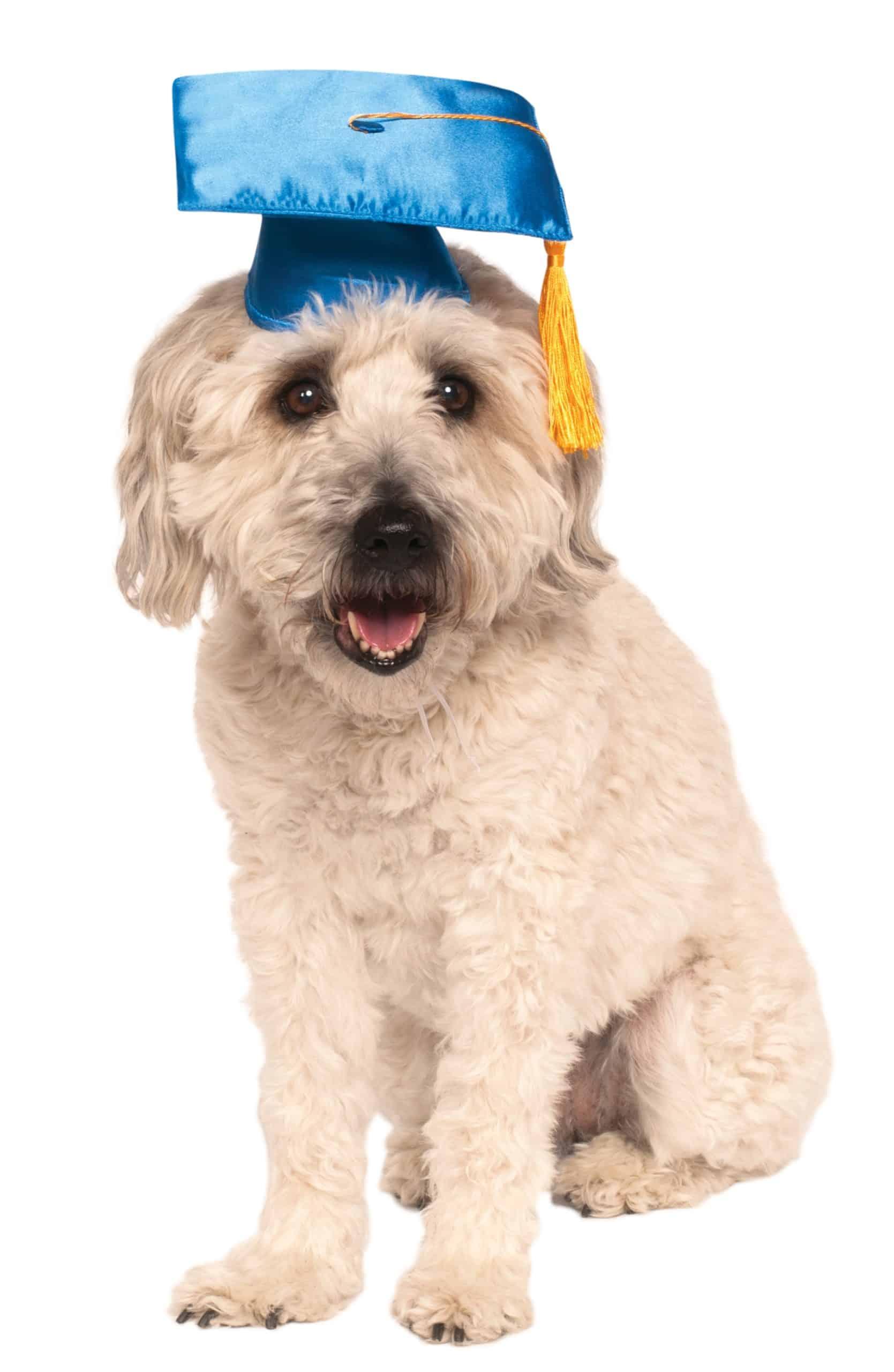 Graduation Dog Hat