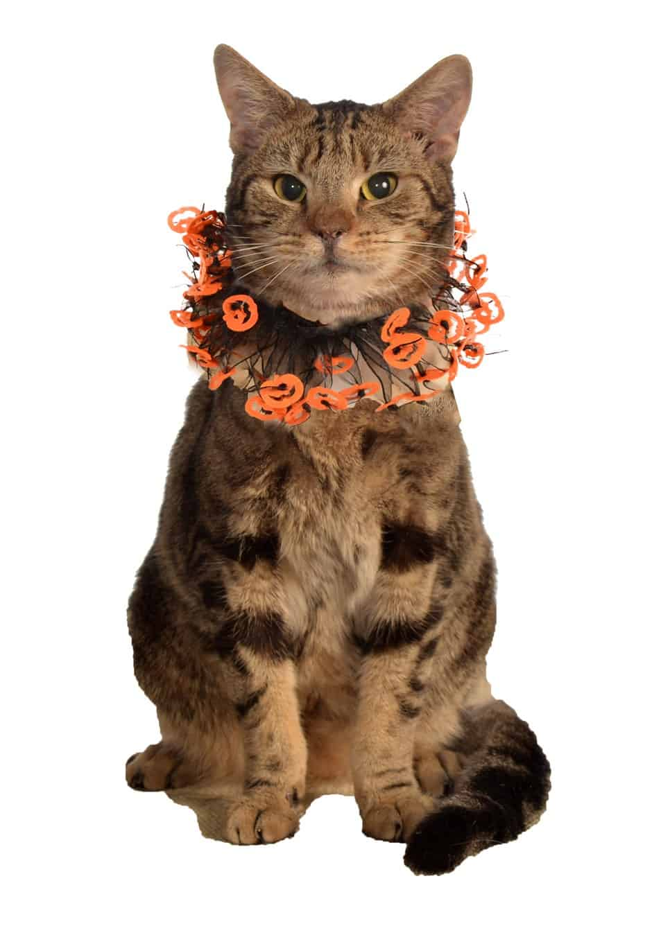 Halloween Jackolantern Collar