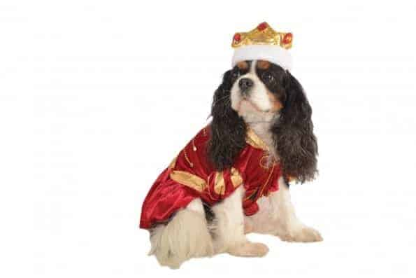 Kanine King Dog Costume