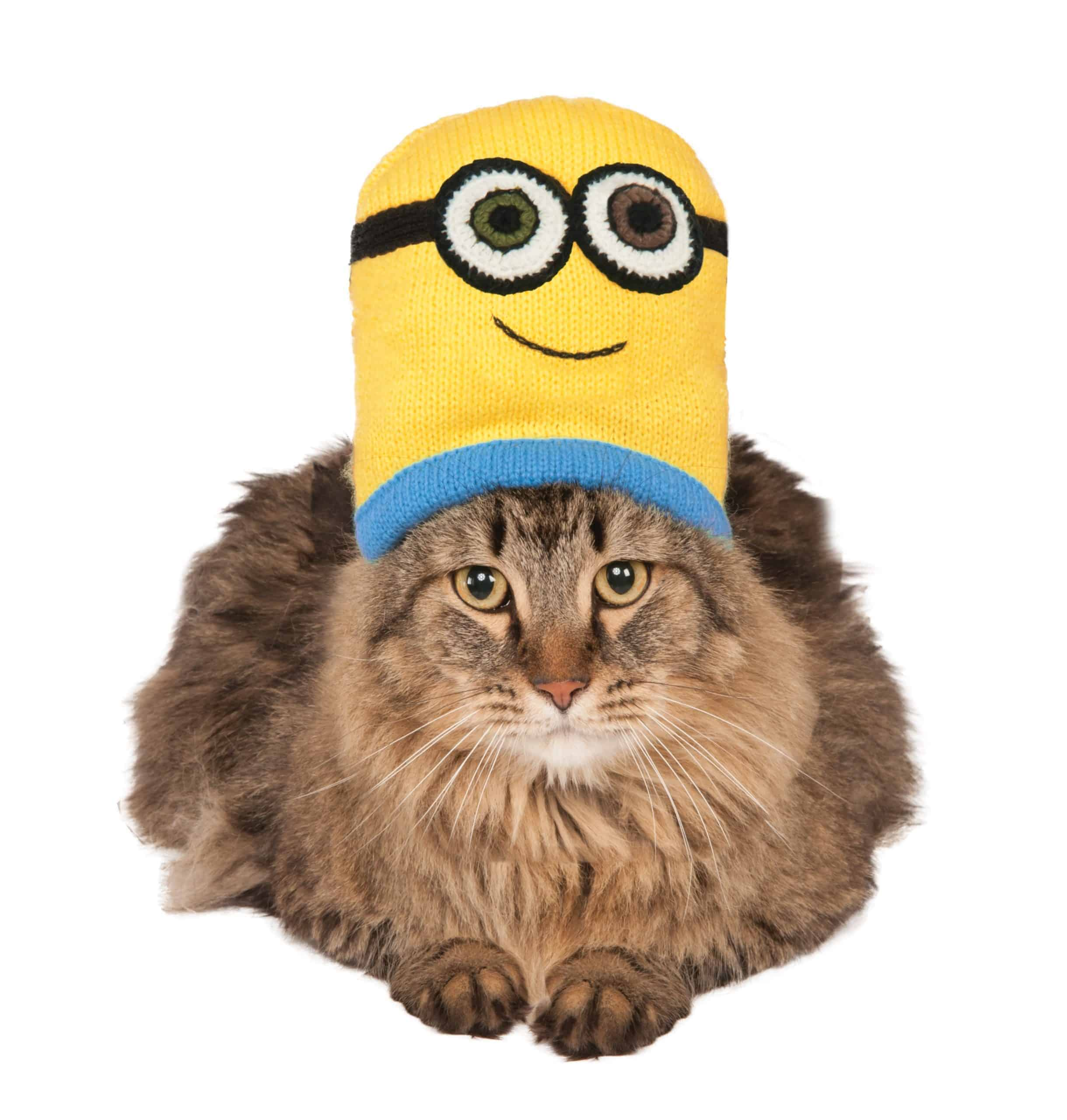 Minion Bob Knit Hat Cat Costume
