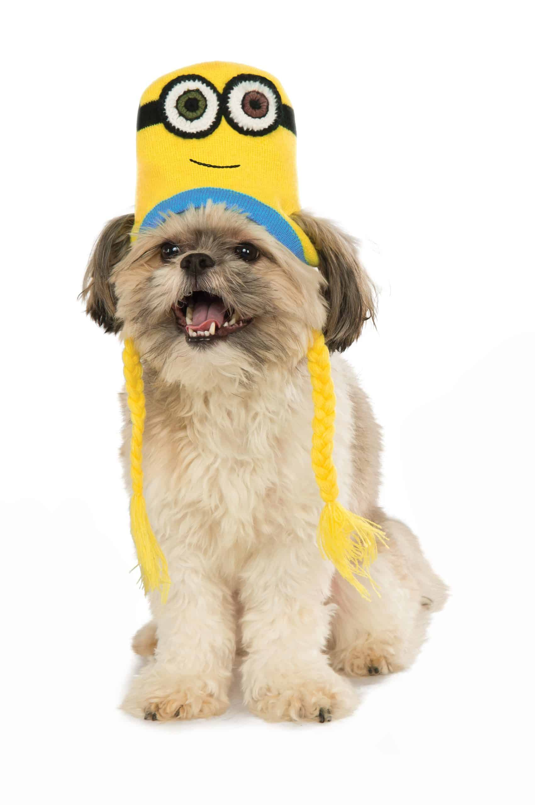 Minion Bob Knit Hat Dog Costume