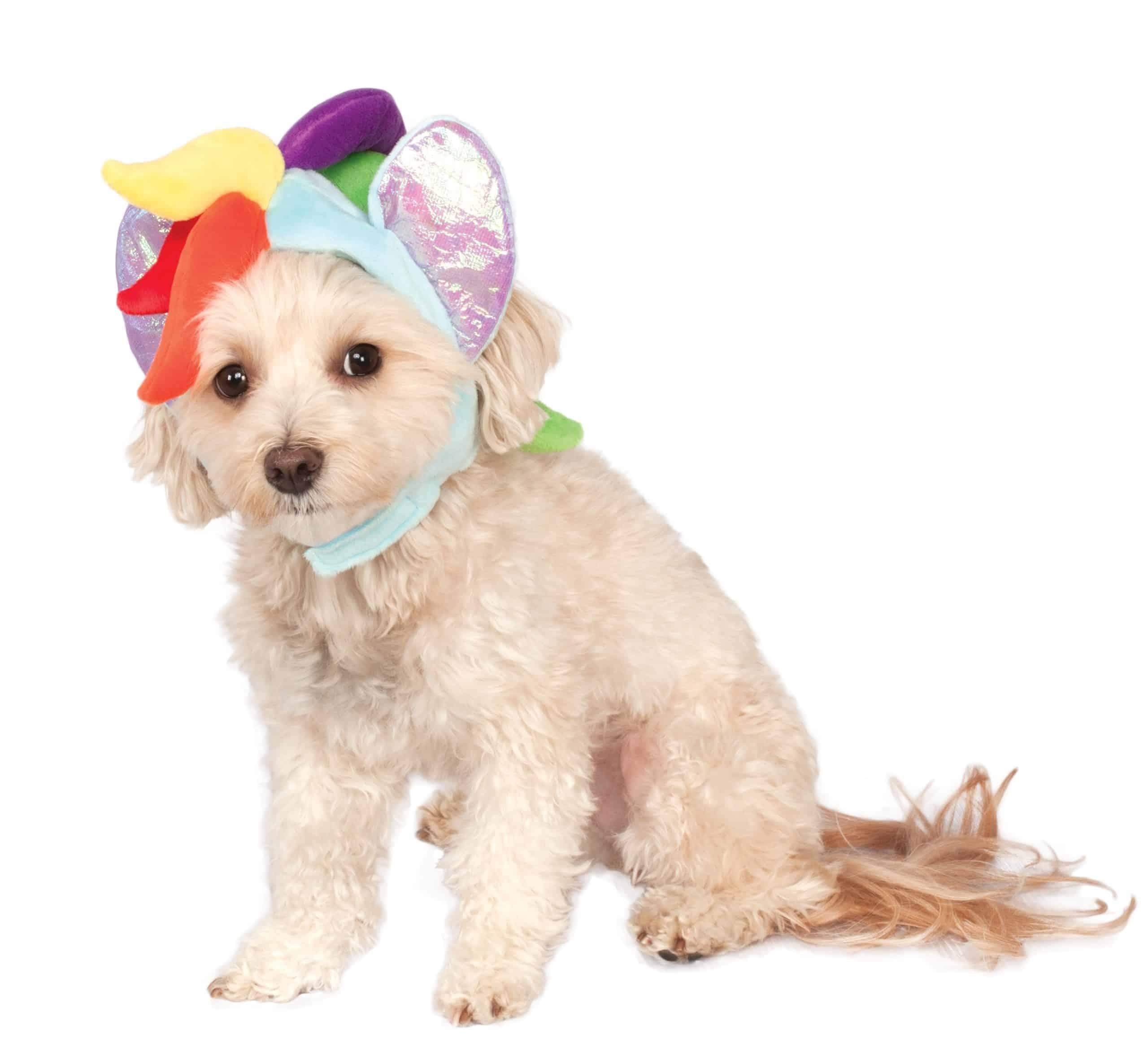 My Little Pony Rainbow Dash Hood Dog Costume