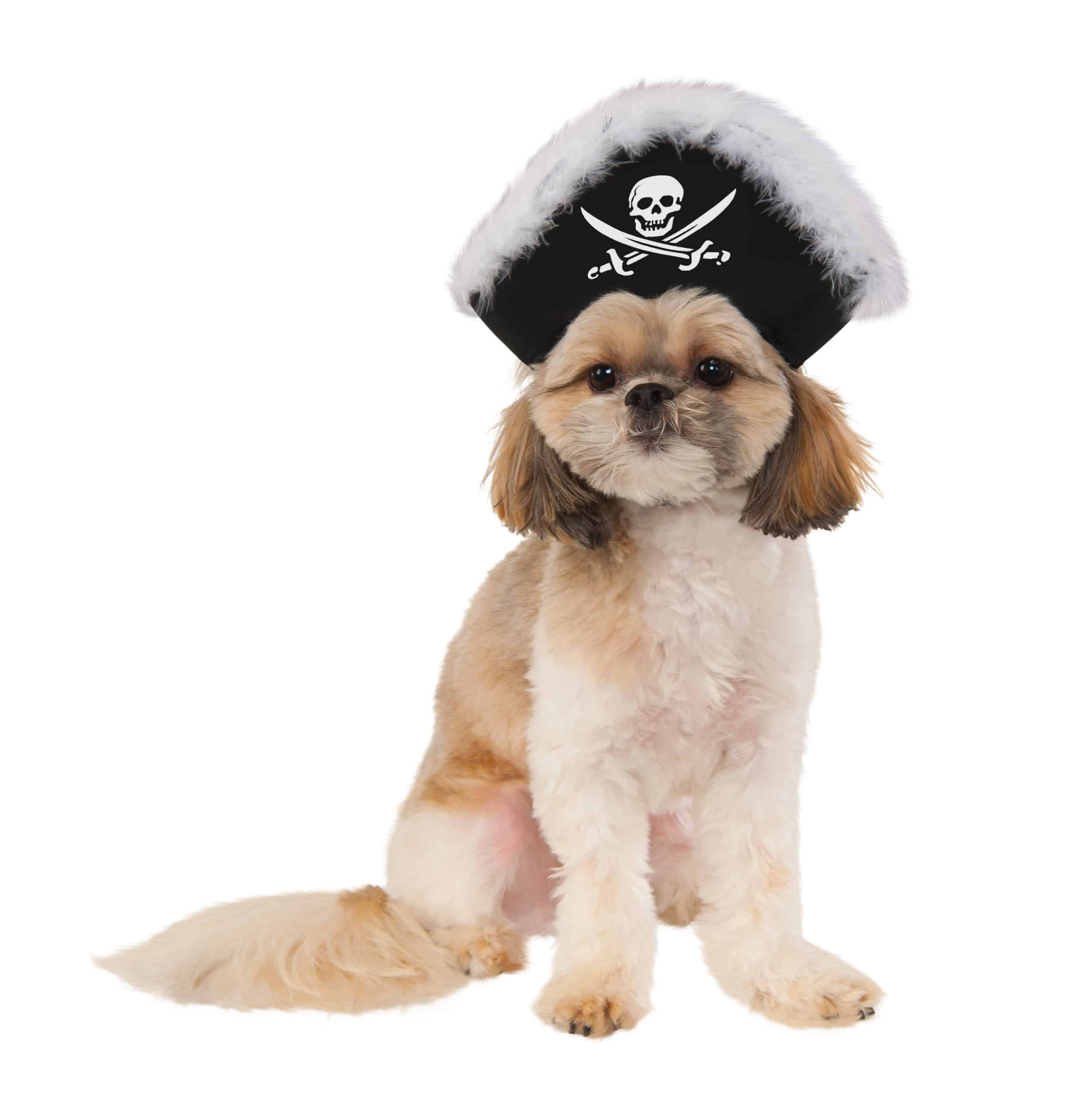 Pirate Captain Dog Hat