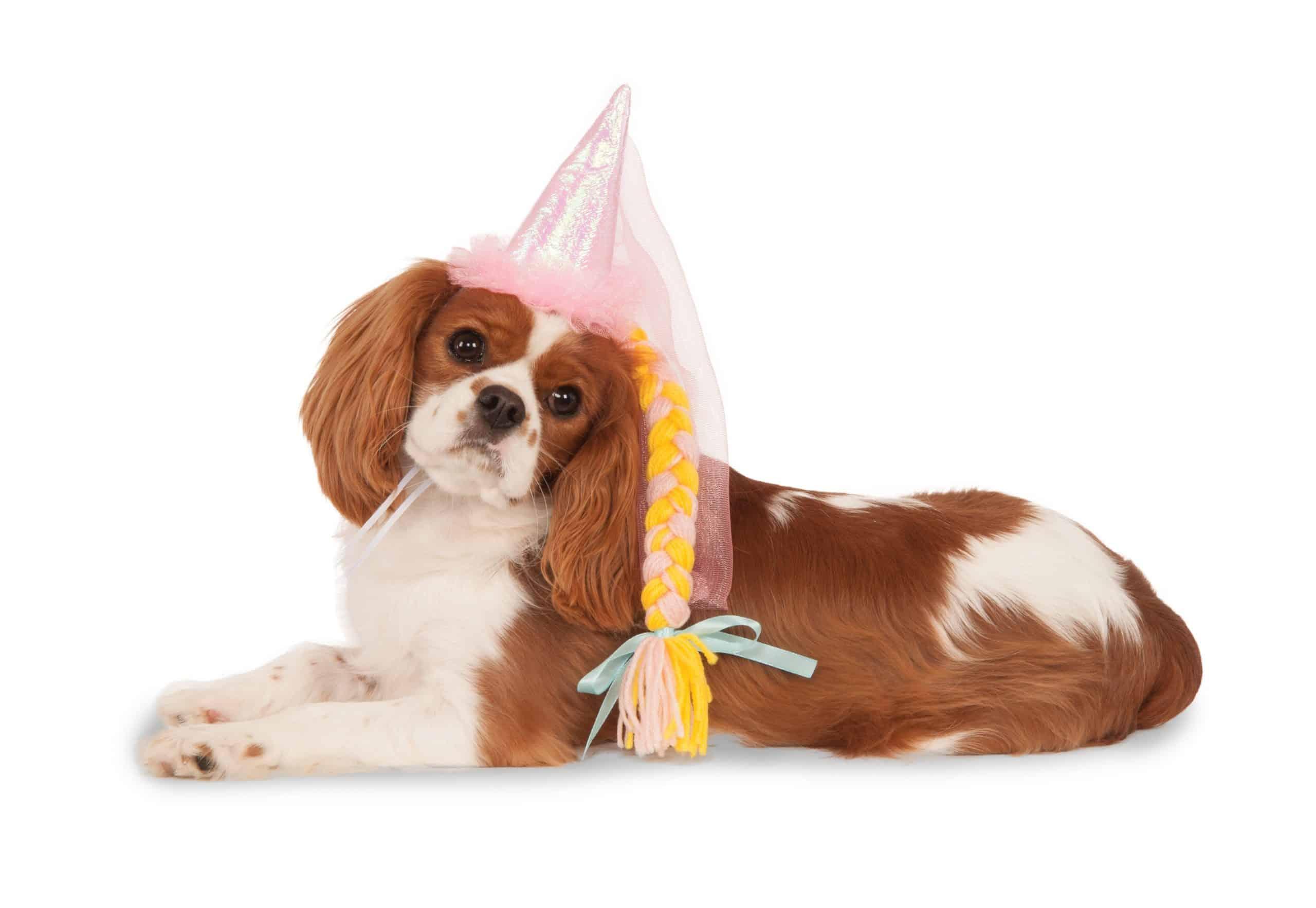 Dog Princess Hat with Braid