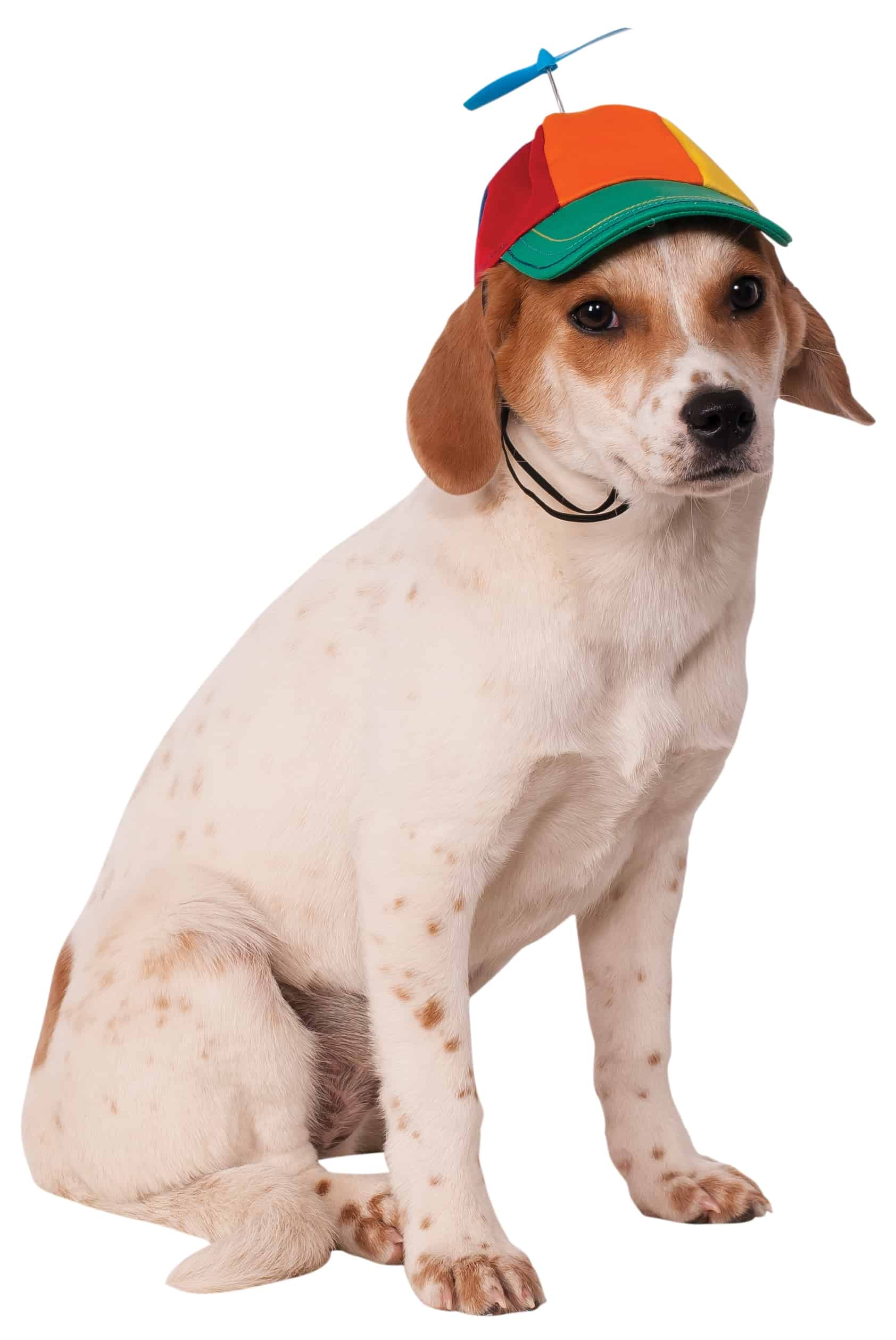 Propeller Dog Hat