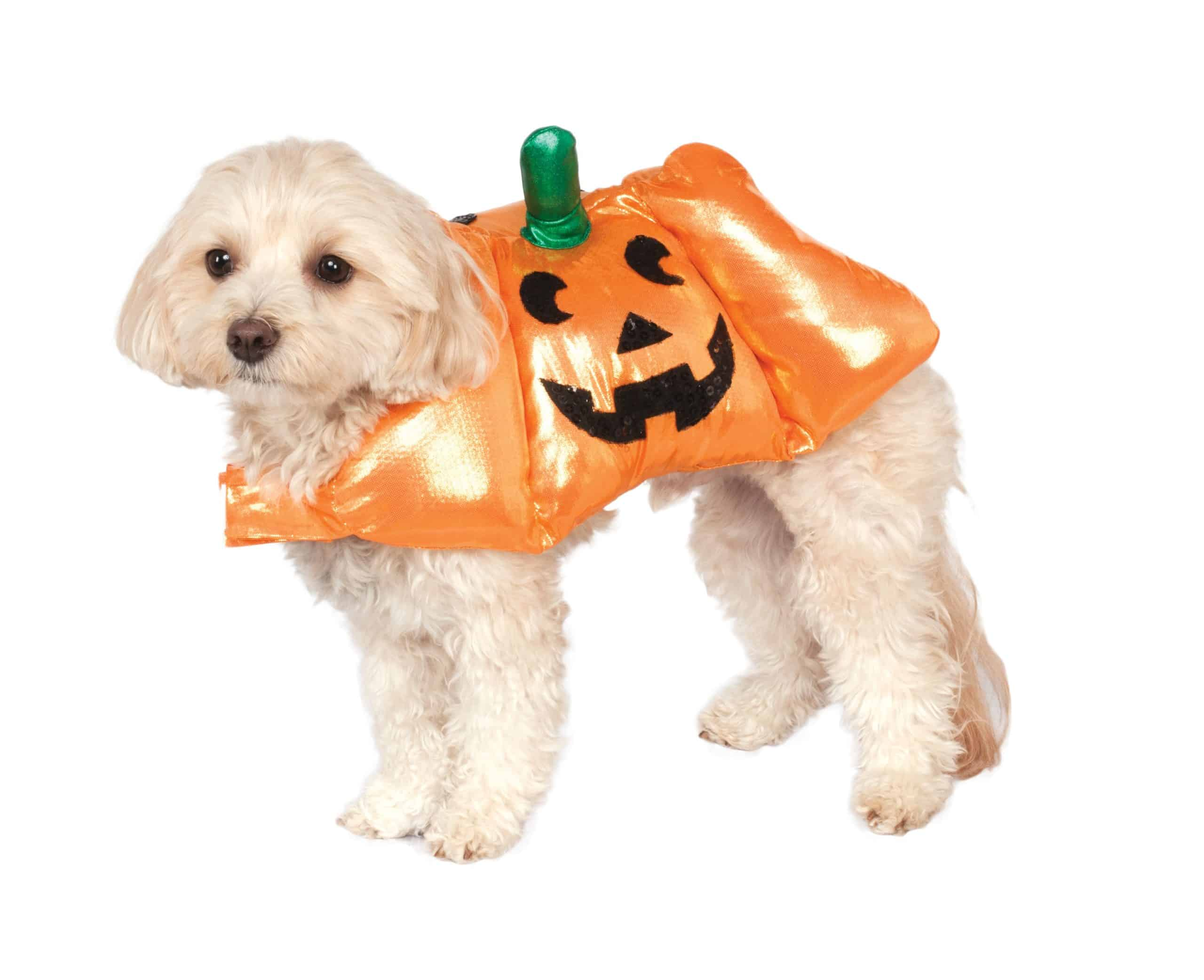 Pup-O-Lantern Pumpkin Dog Costume