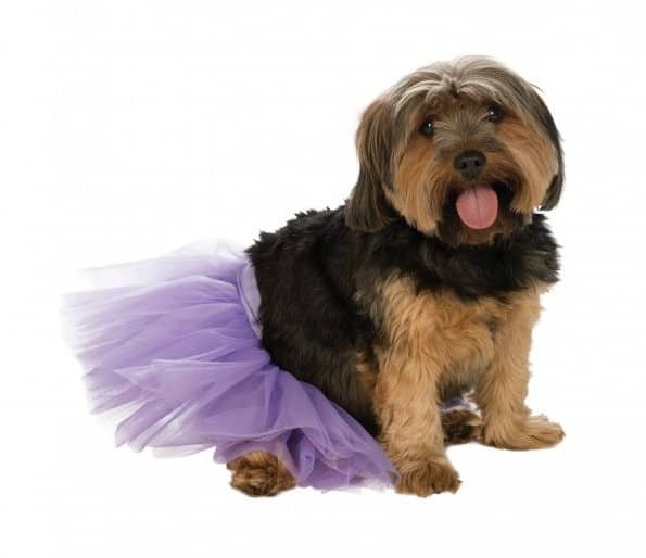 Cat Purple Tutu