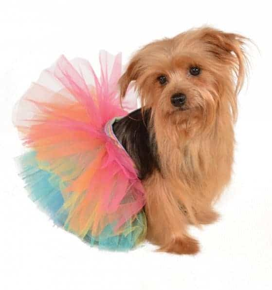Rainbow Tutu Dog Costume
