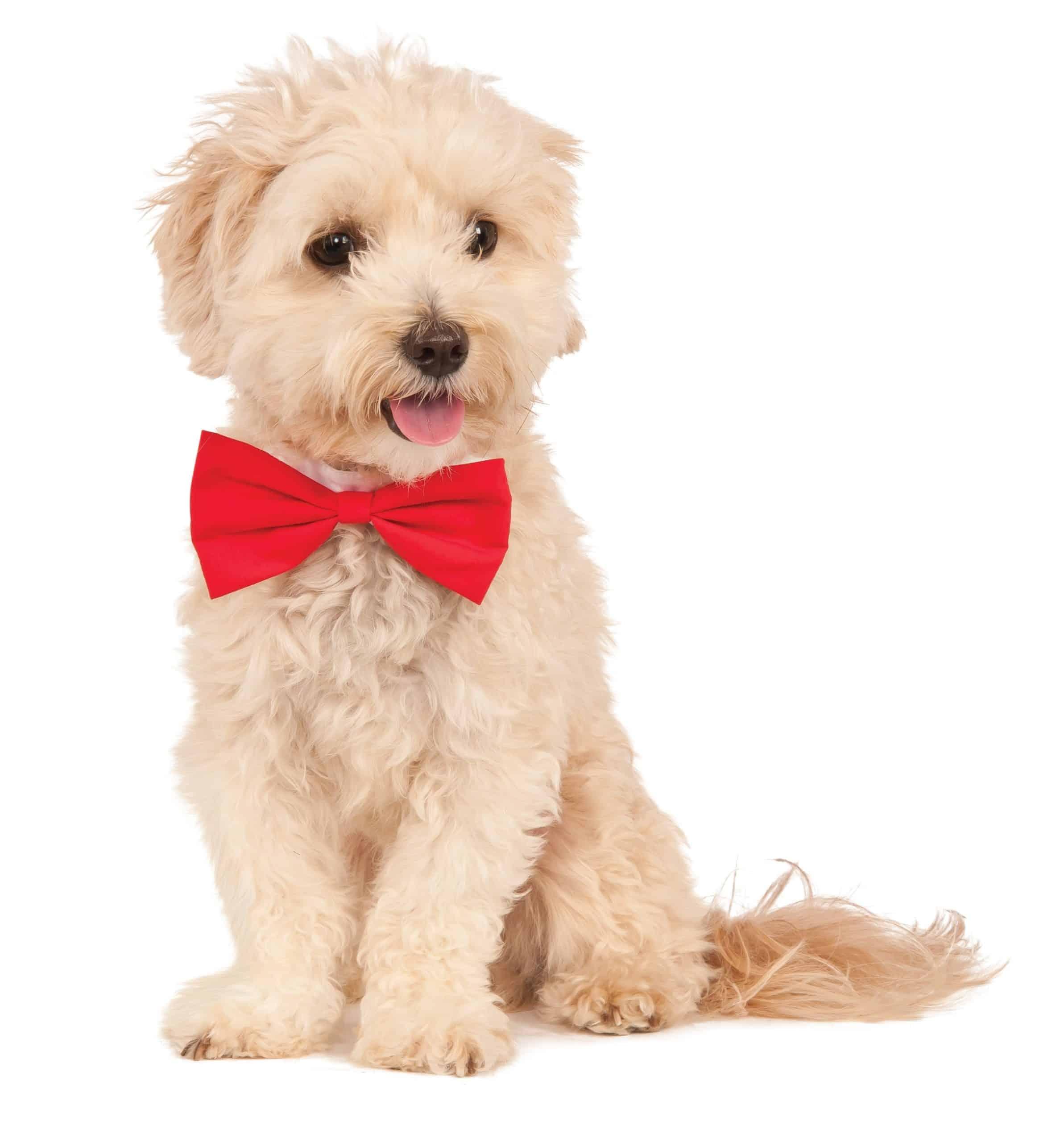 Red Dog Bowtie