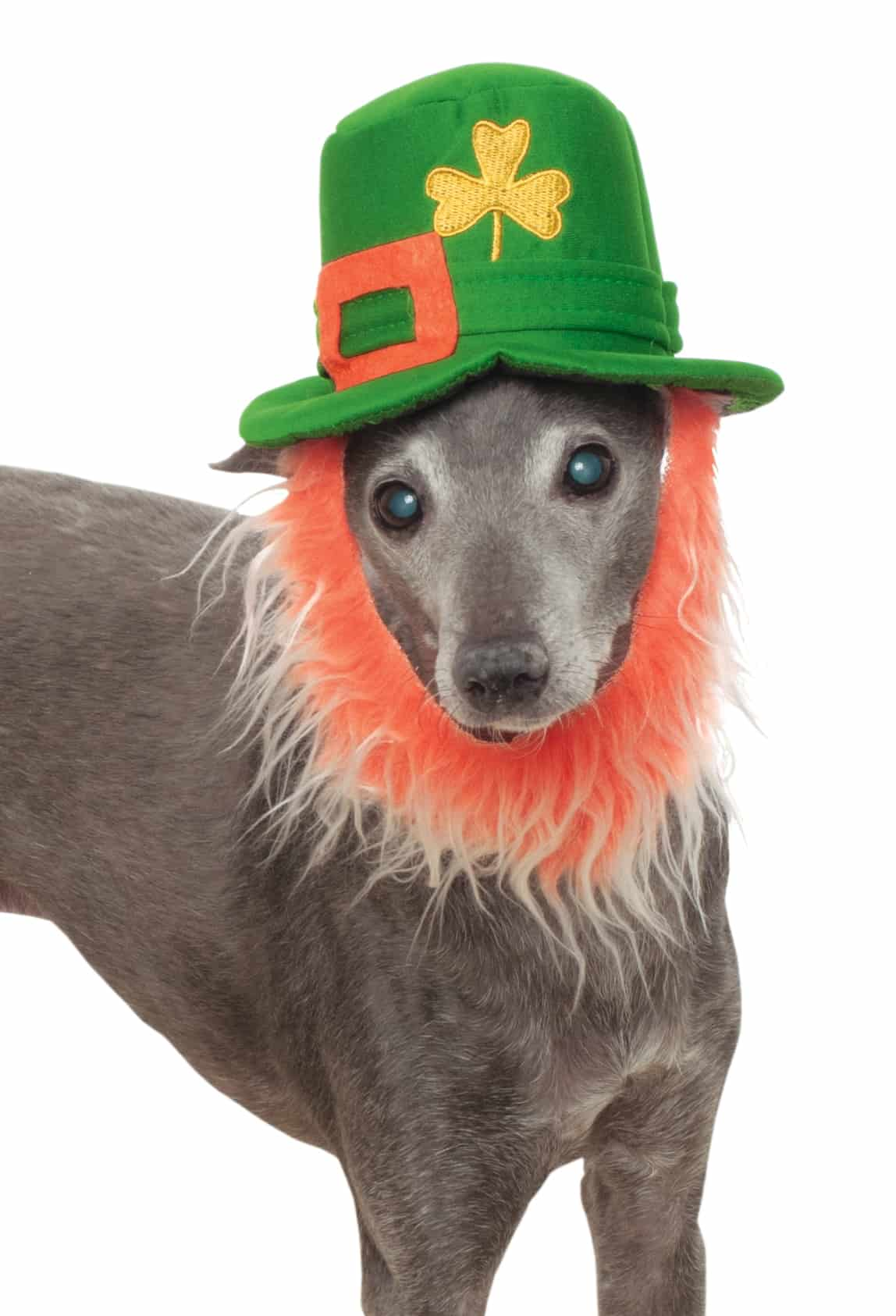 St. Patty's Day Dog Hat with Beard