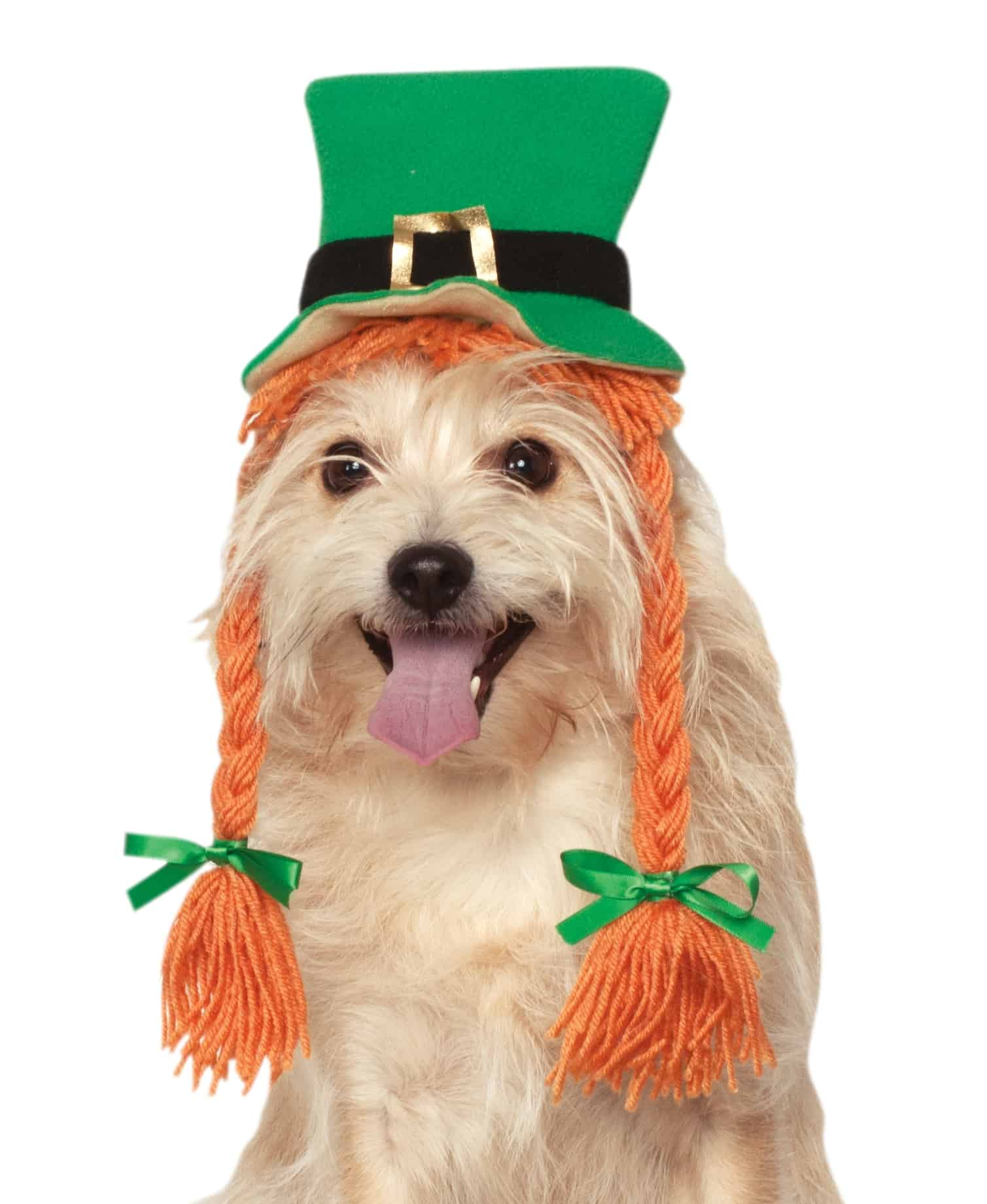 St. Patty's Day Dog Hat with Braids