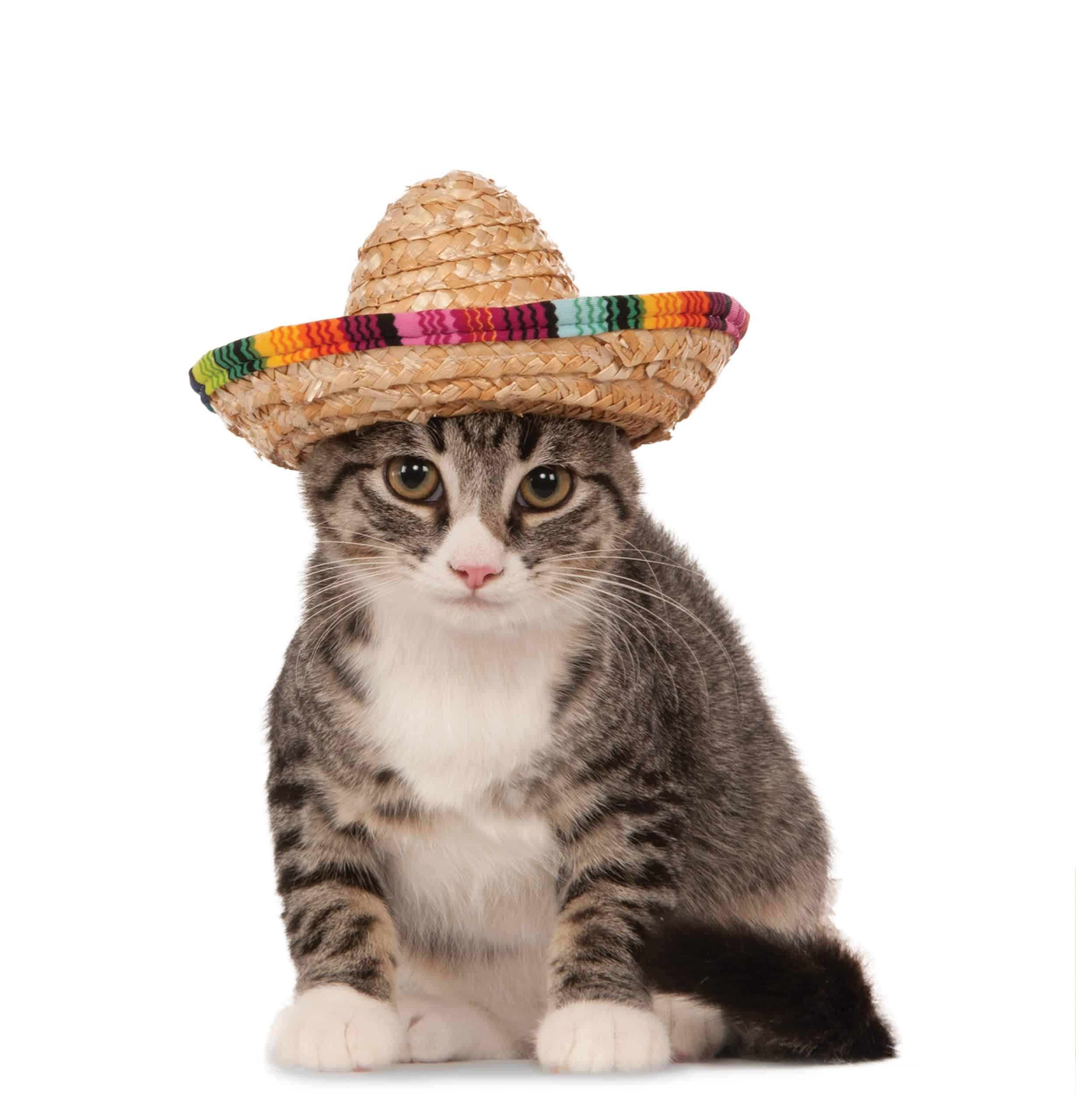 Straw Sombrero Pet Hat