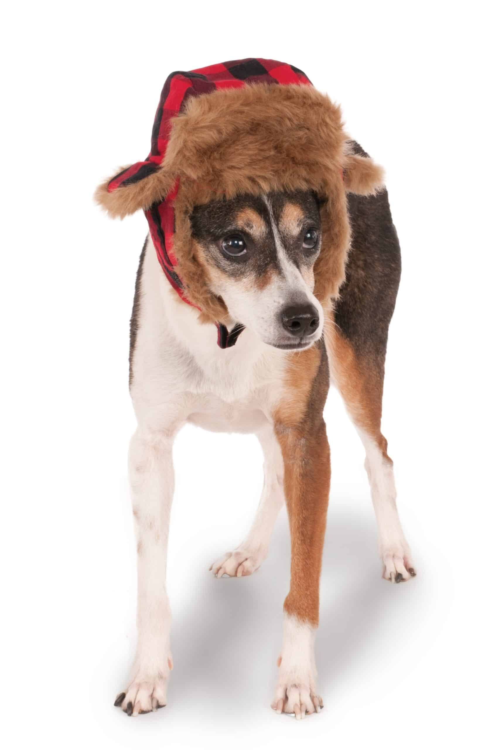 Trapper Dog Hat