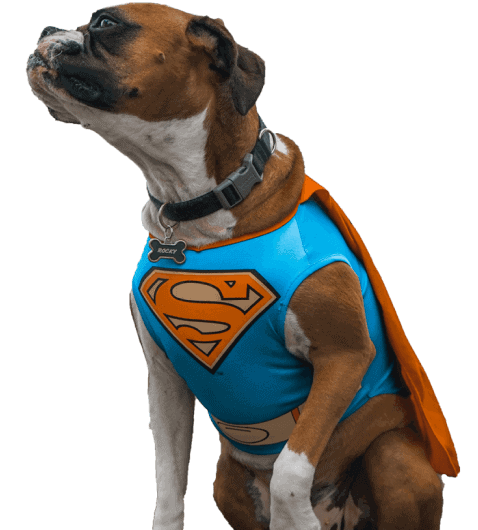 Pet Costume Center Pet Costumes For Any Occasion