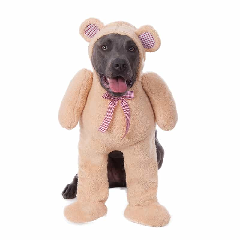 Big Dog Walking Teddy Bear Dog Costume